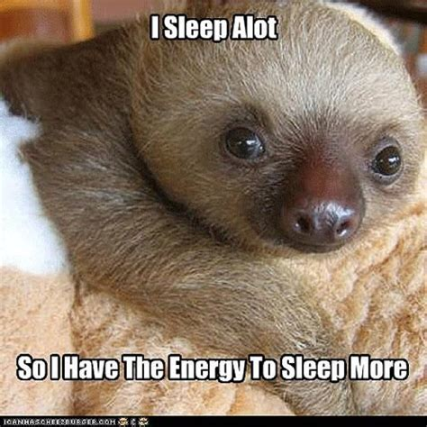 1000+ images about Clean sloth memes on Pinterest | Sloths ...