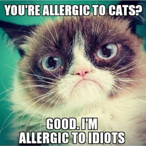 35 Funny Grumpy Cat Memes – Quotes Words Sayings