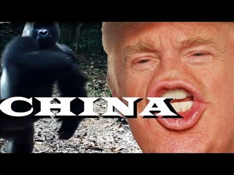 Animals Being Triggered by Donald Trump Memes?! - YouTube