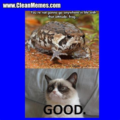 Cat Meme Video Descargarimagenescom