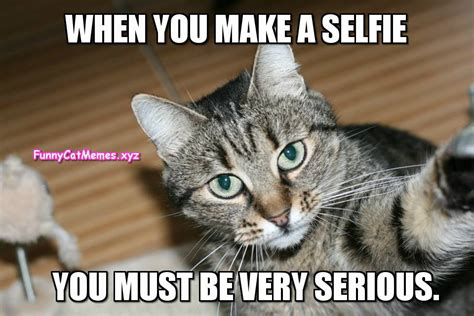 Cat Selfie Meme | www.pixshark.com - Images Galleries With ...