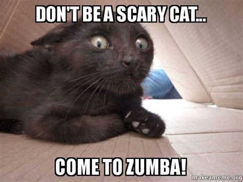 DON'T BE A SCARY CAT... COME TO ZUMBA! - Schitzo Cat ...