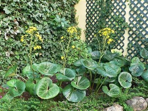 Infojardin Fichas De Plantas - DescargarImagenes.com 1bdea871723