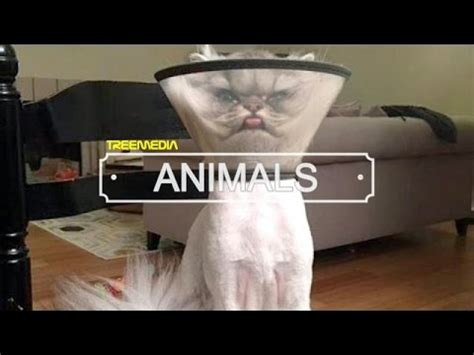 Funny Cat Fails Compilation | Top 10 Funniest Cat Videos ...