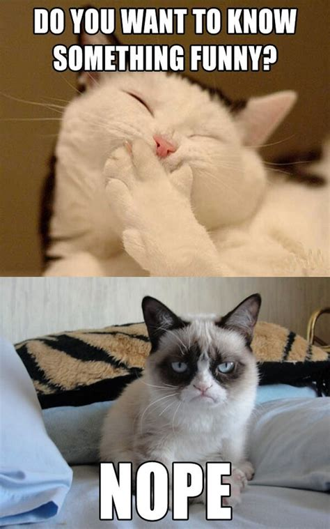 Grumpy Cat Funny | Funny Collection World