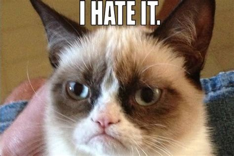 Grumpy Cat gets movie deal, will reportedly star in 'big ...