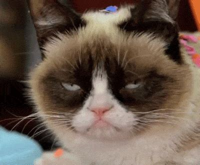 Grumpy Cat's new movie shows she should have stayed a meme ...