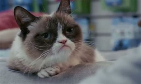 Grumpy Cat's Worst Christmas Ever: The trailer for the ...