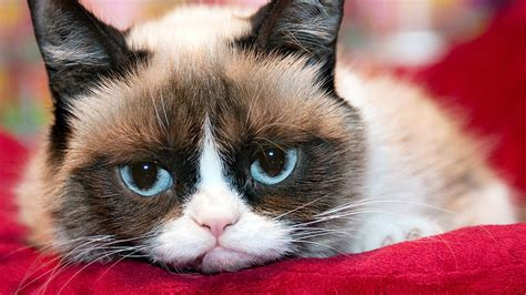 Grumpy Cat's Worst Movie Ever First Look - YouTube