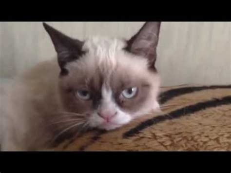 Grumpy cat- the video : videos