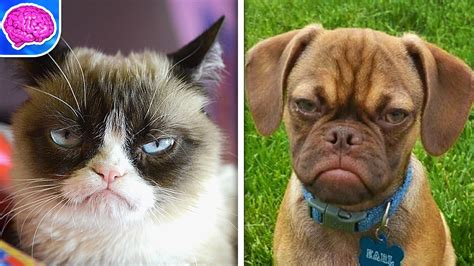 Grumpy Cat VS Grumpy Puppy! - YouTube