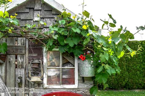If rustic garden sheds could tell stories, this one would ...