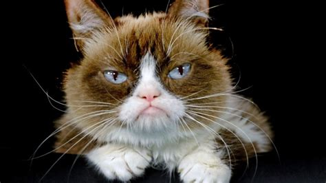 Internet star Grumpy Cat to join a Broadway show 'Cats ...