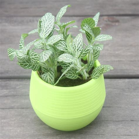Online Get Cheap Plastic Pot Planters -Aliexpress.com ...