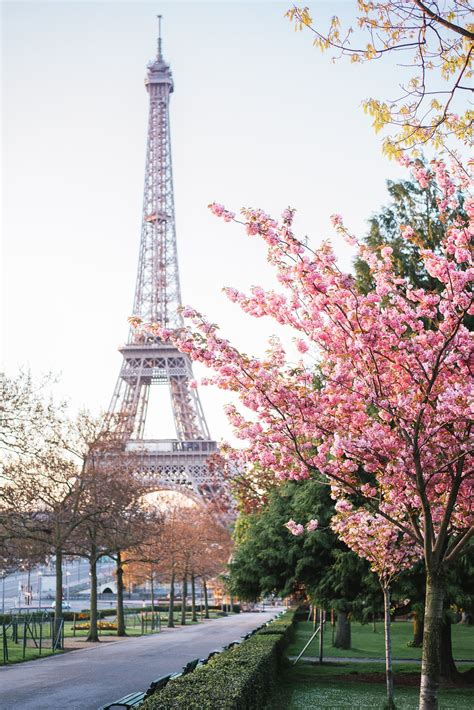 Paris in spring is magical. Cherry blossoms are amazing ...