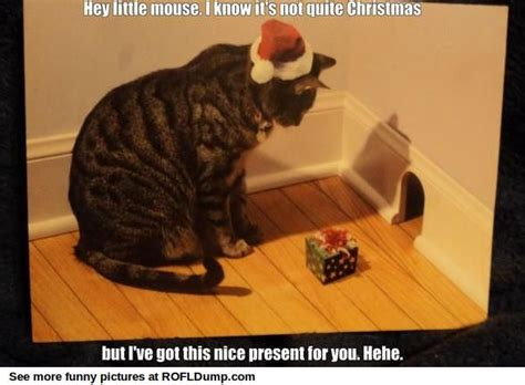 Present for little mouse #meme #funny #lol #cat | Meme ...