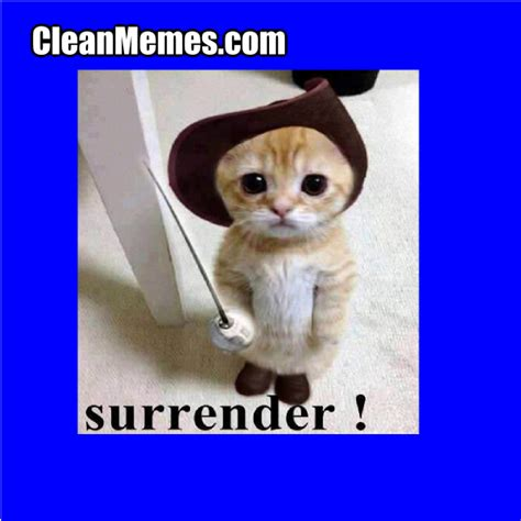 Surrender Cat | Clean Memes – The Best The Most Online