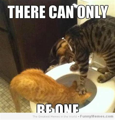 There Can Only Cat Meme - Cat Planet | Cat Planet