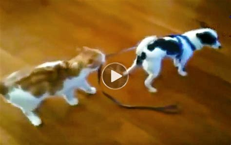 Very funny dog videos & cat videos-top10 viral collection
